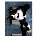 "Black-and-White Tuxedo Cat 20""x16"" Poster"