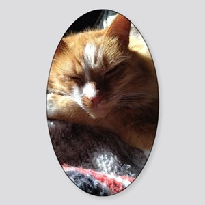 Cozy Sunny Cat Sticker (Oval)