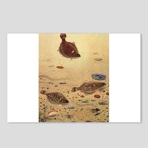 Vintage Marine Life Fish, Flounders Postcards (Pac