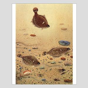 Vintage Marine Life Fish, Flounders Posters