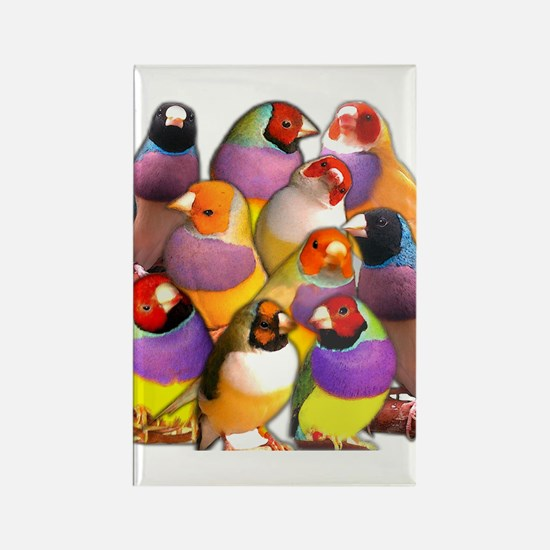 Gouldian Finch Rectangle Magnet