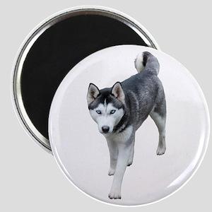 Husky Magnet