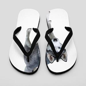 Husky Flip Flops
