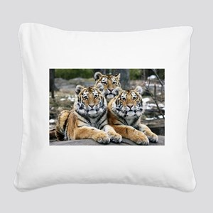 TIGERS Square Canvas Pillow