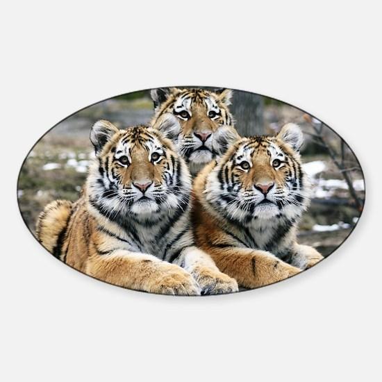 TIGERS Sticker (Oval)