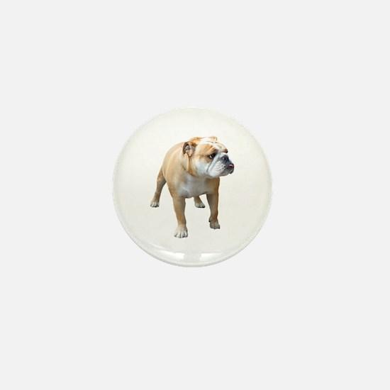 Cute American bulldog Mini Button