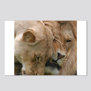 Nuzzling Lions Postcards (Package of 8)