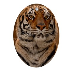 Tiger Portrait Oval Ornament