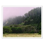 California's Redwood National Forest Scenic Poster