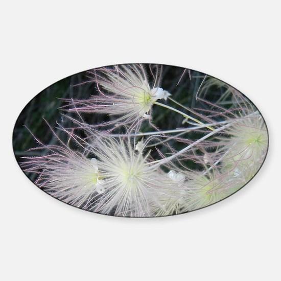 FLOWER FLUFF Sticker (Oval)