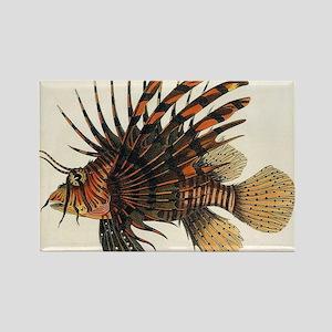 Vintage Lionfish Rectangle Magnet
