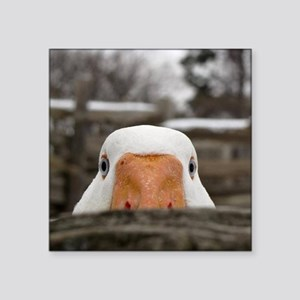 "Peeking Goose Square Sticker 3"" x 3"""