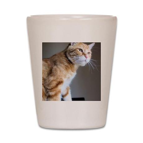 Glamorous male cat  Shot Glass
