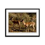 African Antelope Framed Panel Print