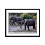 African Elephants Framed Panel Print