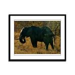 African Bull Elephant Framed Panel Print