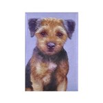 Border Terrier Rectangle Magnet (10 pack)