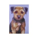 Border Terrier Rectangle Magnet (100 pack)