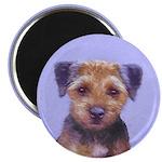 Border Terrier 2.25