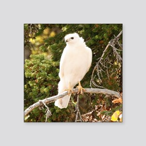 White red tail hawk Sticker