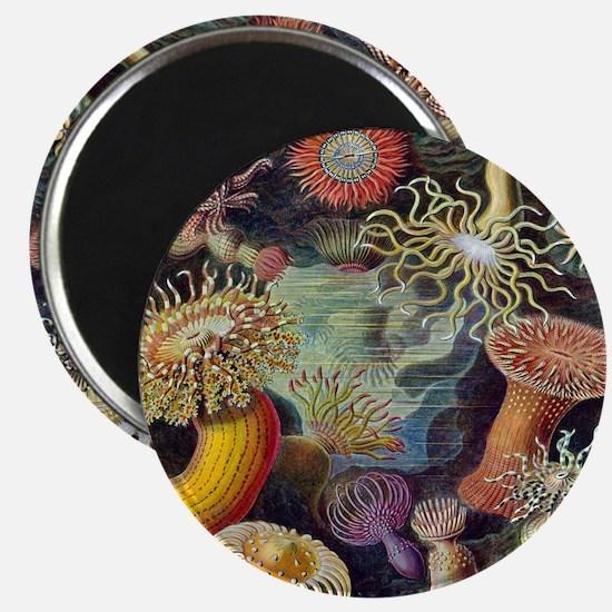 Vintage Sea Anemones Magnet