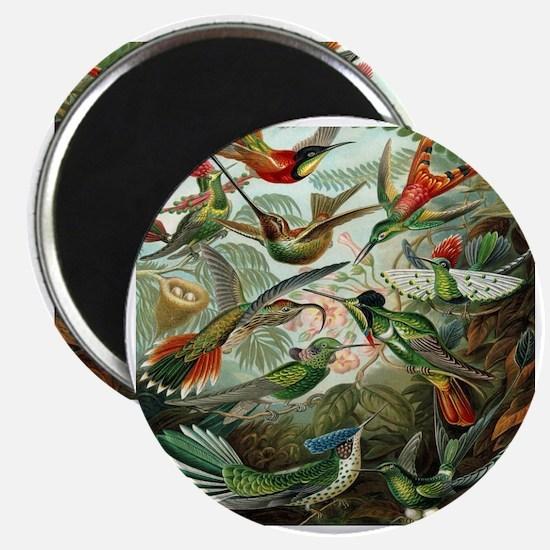 Vintage Hummingbirds Magnet