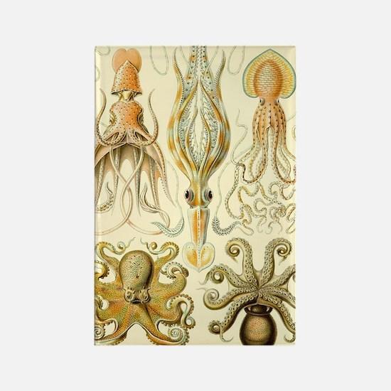Vintage Octopus, Octopi Rectangle Magnet