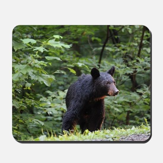 Smoky Mountain Black Bear Mousepad