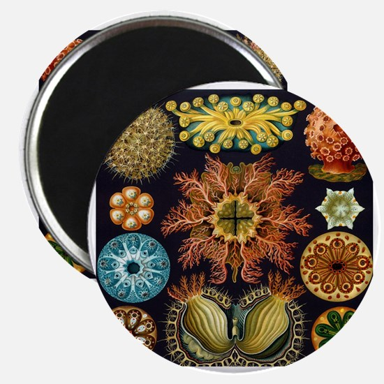 Vintage Marine Life Magnet