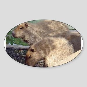 capybaras Oval Sticker