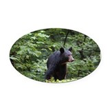 Animals black bears Oval Car Magnets