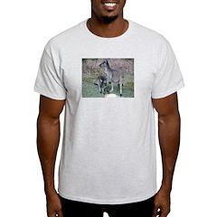 Kangaroos Ash Grey T-Shirt