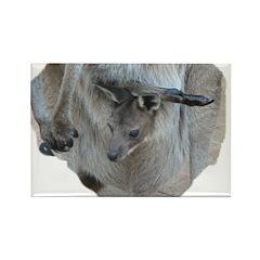 Kangroo Joey Rectangle Magnet (100 pack)