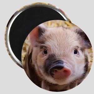 sweet piglet Magnets