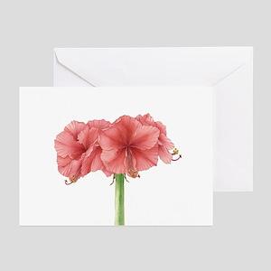 Amaryllis Greeting Cards