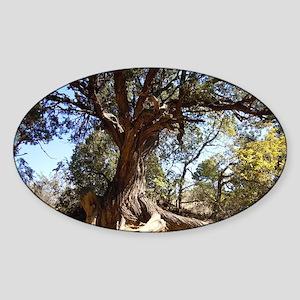 Twisted Tree Sticker (Oval)