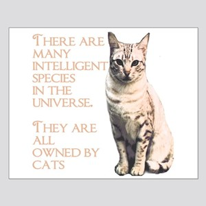 cats and intelligence Posters