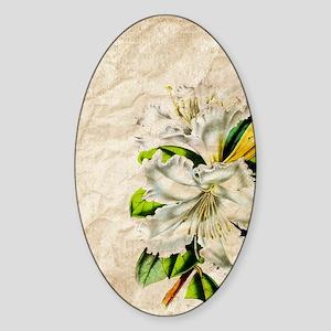 vintage lily botanical art Sticker (Oval)