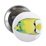 Queen Angelfish 2.25