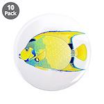 Queen Angelfish 3.5