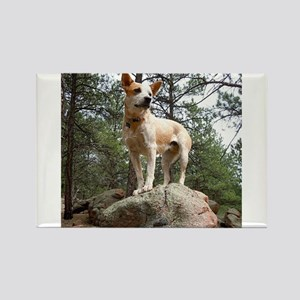 Red Heeler on Rock Magnets