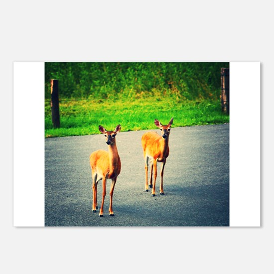 Two Watchful Deer in the Smoky Mountains Postcards