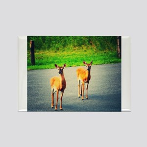 Two Watchful Deer in the Smoky Mountains Magnets