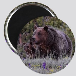 Grizzly Bear# 399 and her Triplets Magnets