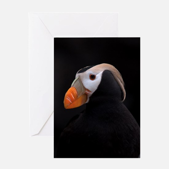 Puffin Tufted 8931 Greeting Card