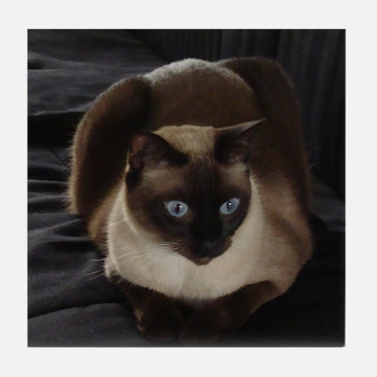 Lulú, the Siamese Cat Tile Coaster