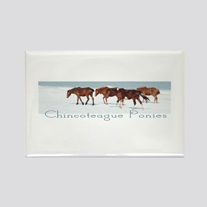 Chincoteague Ponies Rectangle Magnet