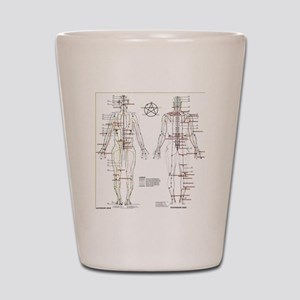 Chinese Meridians and Pressure points Shot Glass