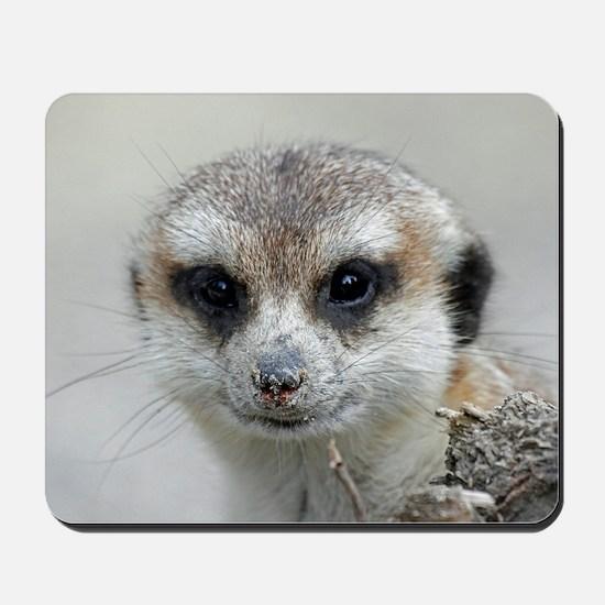 Meerkat001 Mousepad