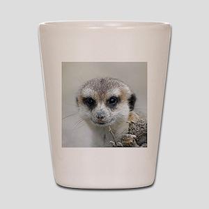 Meerkat001 Shot Glass